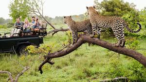 need to expect from a luxury safari